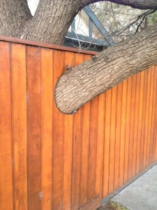 tree in fence